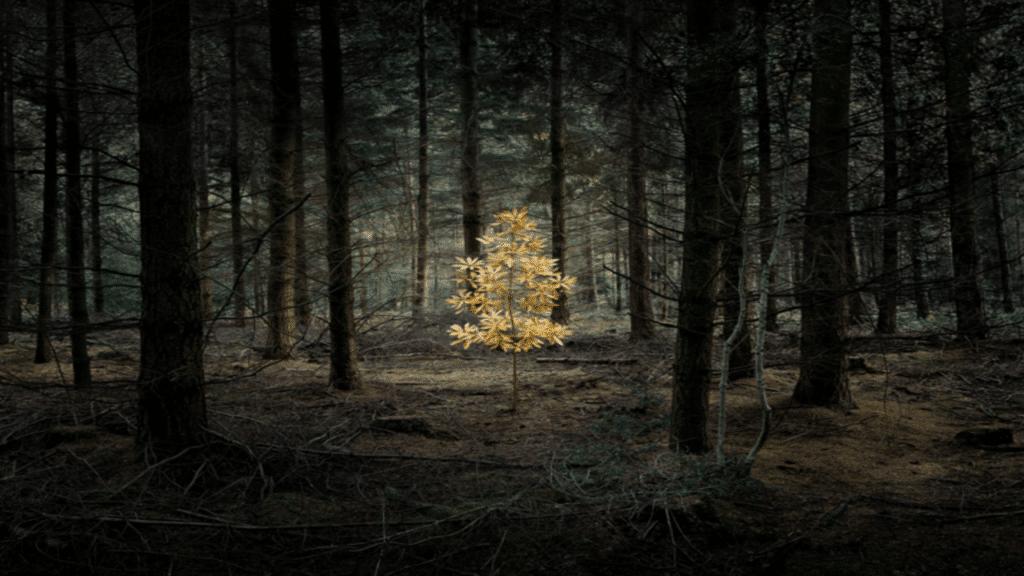 Μήπως βλέπουμε το δέντρο και όχι το δάσος ?